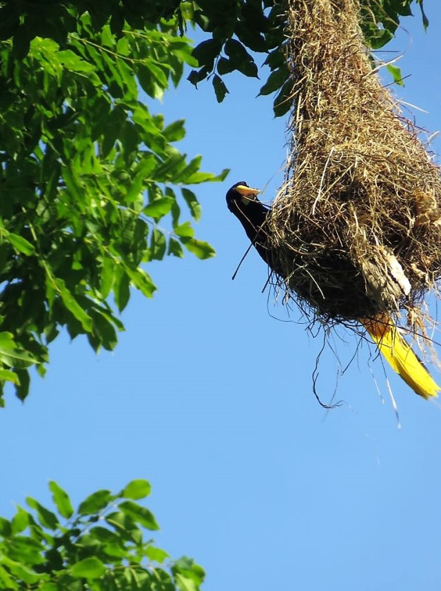 Bird 3